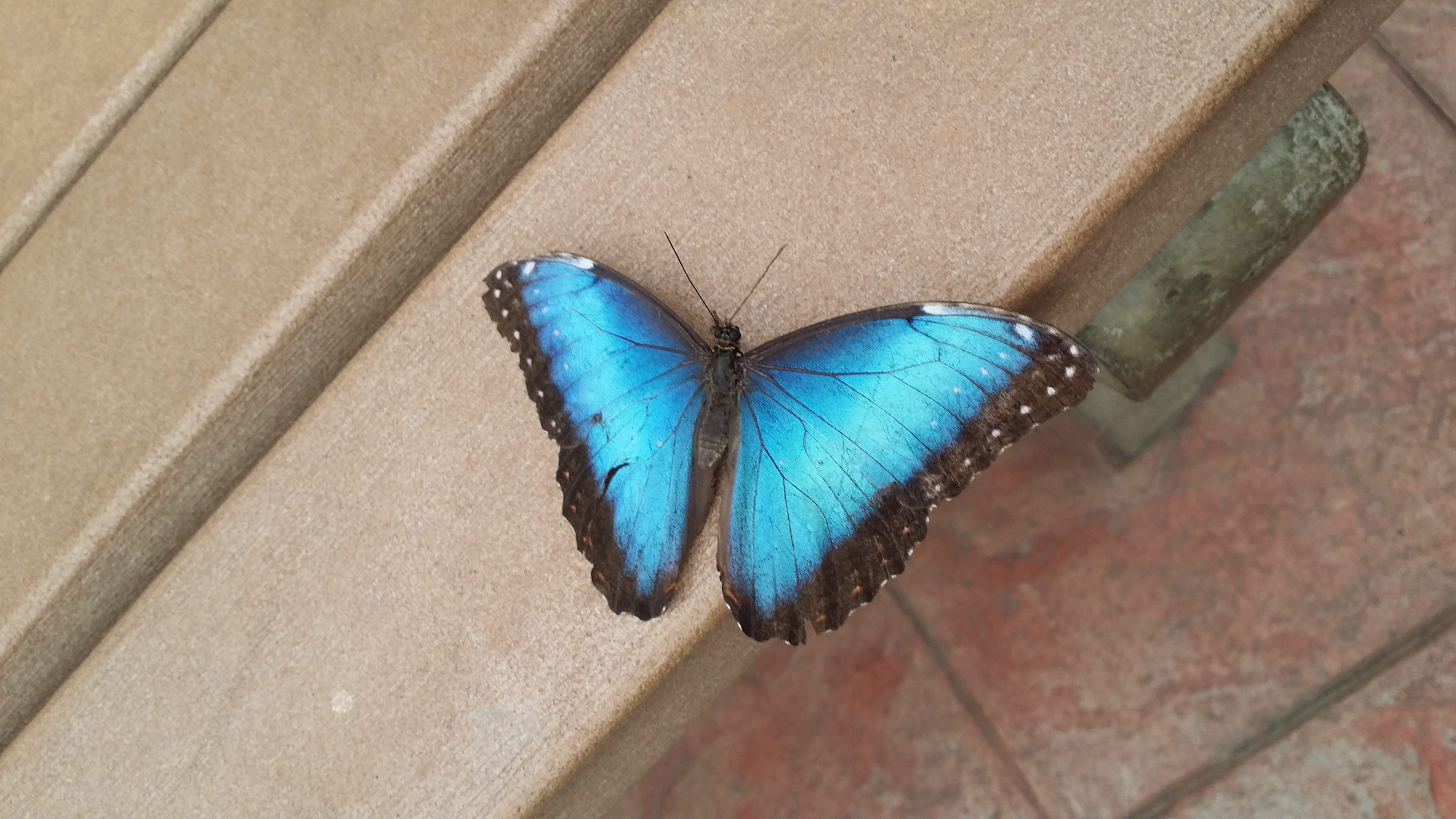 sertoma butterfly house & marine cove located in sioux falls